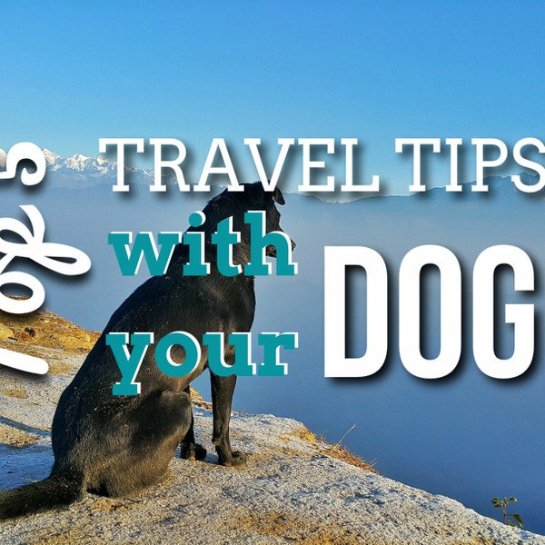 Five top road trip tips with your dog Upload Your Music Free
